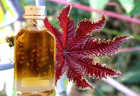 репейное и касторовое масло для волос применение