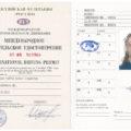 Чем отличаются международные водительские права от обычных и национальных - что это такое