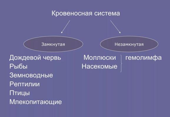 примеры замкнутой кровеносной системы