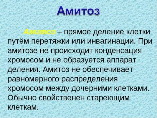 амитоз кратко