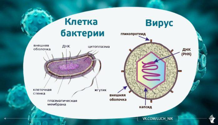 Что такое бактерии, как они передаются