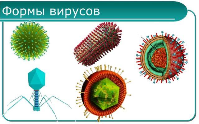 Формы вирусов