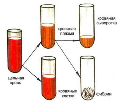 Как делают плазму и сыворотку крови